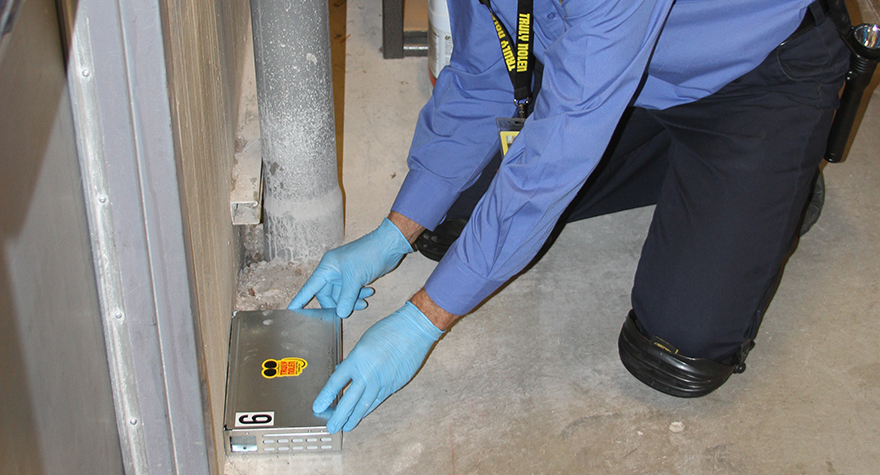 Pest professional placing rat trap near wall