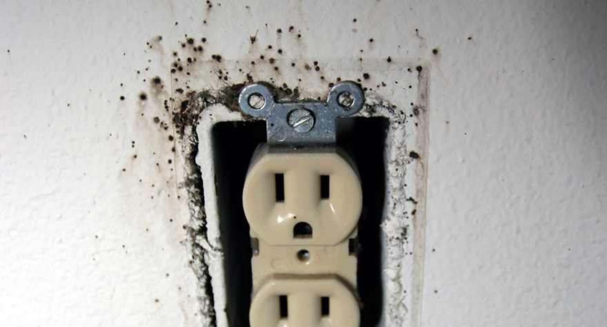 Power outlet infested with bed bugs