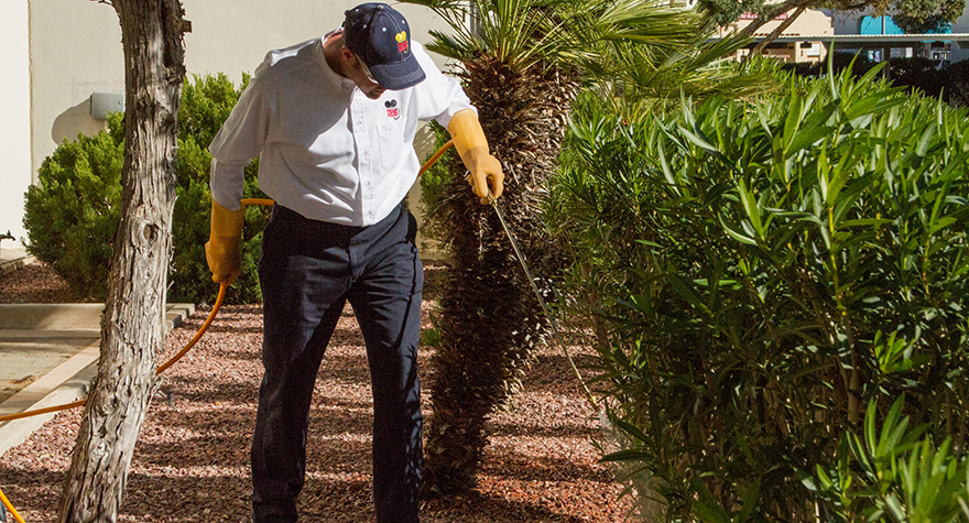 Pest professional applying pesticide near bushes
